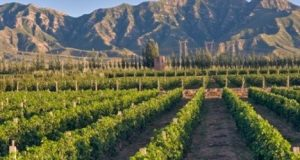 Les vignobles chinois s'associent aux groupes français pour développer leur savoir faire