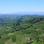 Le collines du vignoble de Barolo