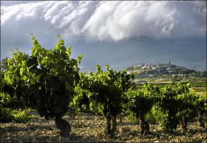 Les influences climatiques de la Rioja en font un vignoble unique