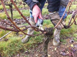 Durant l'hiver, le vigneron s'attache à tailler sa vigne