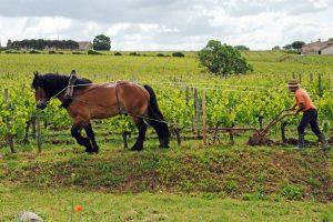 Le labourage peut se faire de manière manuelle, à l'aide d'un cheval, ou motorisée, à l'aide d'un tracteur