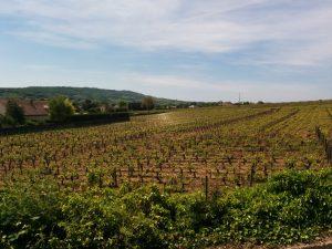 La Bourgogne, une région viticole ET gastronomique