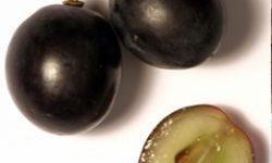 La chair d'un raisin rouge est blanche