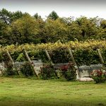 A quoi servent les rosiers plantés aux pieds des vignes ?