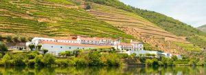 Les vignes s'étalent sur des terrasses creusées dans les collines de part et d'autre du Douro.