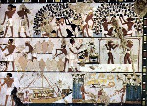 Traces de viticulture sur une fresque égyptienne @wikipedia