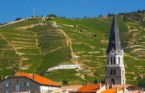 La colline de l'Hermitage, dans la vallée du Rhône a bâti sa réputation sur la syrah